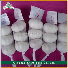 10kg/ carton Chinese Fresh Garlic for kuwait market