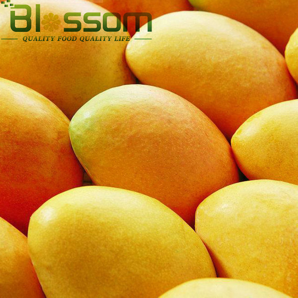 China exporter hot sale natural fruit organic farm fresh sweet frozen mango