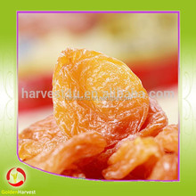 low price wholesale high quality dried apricot fruits