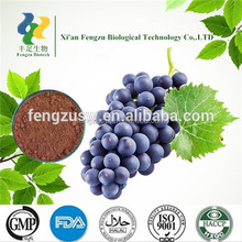 Grape Seed Extract,Dried Grape seed organic powder Manufacturer