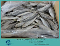 FROZEN HORSE MACKEREL FISH WHOLE ROUND