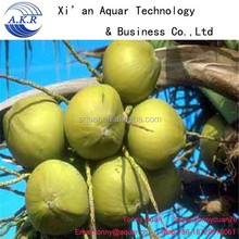 Pure nature Saw Palmetto,Best Quatily Saw Palmetto Extract,Factory supplying saw palmetto fruit extract