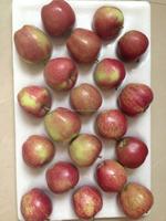 18kg carton 163/175 red star apple