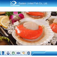 alibaba gold supplier frozen half shell scallop with roe