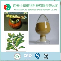 TOP SALE Ilex Paraguariensis/ParaguayTea plant extract/Yerba Mate Extract