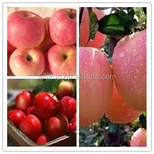 fresh apple fruit importer and exporter