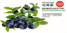 Green and Natural Bilberry Fruit Powder Extract with Anthocyanins 35% HPLC Anthocyanidins 30% UV