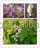 Natural Hot sale Cloves,High quality Cloves Powder