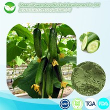 Cucumber extract /Cucumber extract food grade/cucumber extract powder
