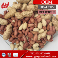 Good blanched peanuts 41/51 2014/blanched peanut kernel/blanched peanuts kernel/blanched peanut kernels