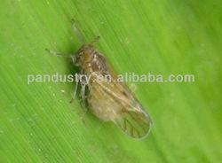 insecticide manufacture 98%TC 90%SP 40%SP 20%EC 24%SL Thiodicarb/ Lannate/Methomyl in secticide