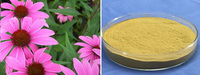 100% Natural Echinacea Purpurea Extract Polyphenols With Manufacturer Supply