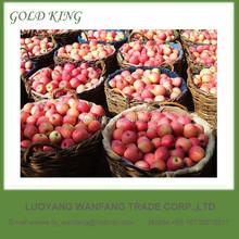 Fresh fuji apple fruit imported from China