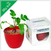 Planters and Pots,mini biodegradable bonsai plants