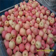 Chinese Red Fresh Fuji Apple