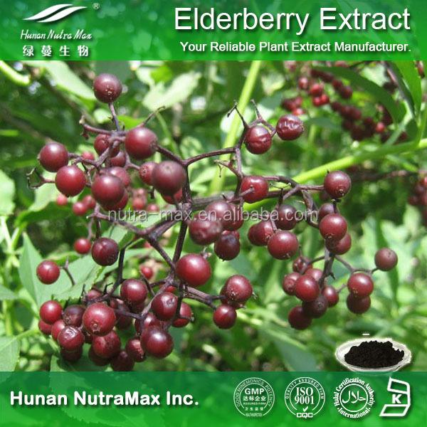 Elderberry Extract.jpg