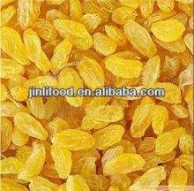 dried sweet cherry standard golden raisin