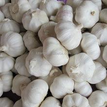 2015 crop fresh natural garlic wholesale garlic with best garlic price