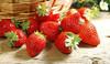 iqf frozen fruit frozen strawberry