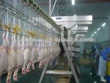 las aves de corral pollo matadero