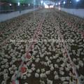 Pezón aves de corral sistema de bebederos / aves agua pezones / bebedero para pollo