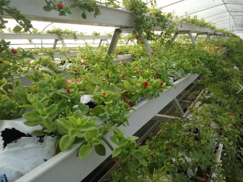 PVC Cultivation Gutter PIC
