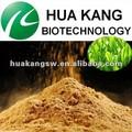extracto de la planta fabricante extracto de té verde