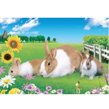 China Supplier Good Selling PET Material 3d Pictures Animal Animation