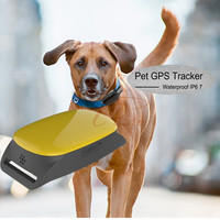 low price gps module Pet GPS Tracker IOS and Andriod App