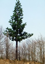 Bionic Tree Camouflaged Tower