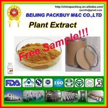 Top Quality From 10 Years experience manufacture echinacea extract