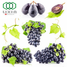 Antioxidant GMP OEM factory supply Natural Organic Grape Seed Extract With 95% OPC Grape Seed Extract Powder