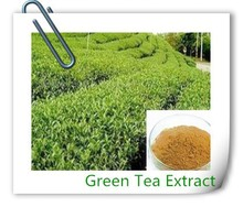 100% pure organic green tea extract,green tea extract powder
