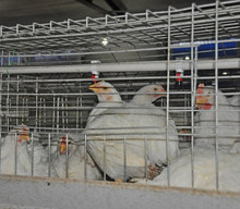 POUL TECH Broiler chicken cage guangzhou chicken breeding cage