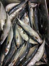 2015 New coming new storage pacific mackerel fish
