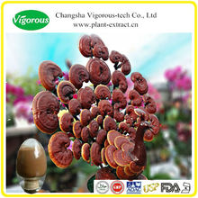 orgánica glossy ganoderma lucidum polvo