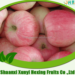 2015 China Fresh fuji apple in Cold storage in stock on sale