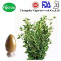 Común extracto de tomillo/natural extracto de tomillo/tomillo extracto de hoja de
