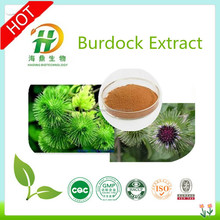 GMP Manufacture Burdock Root Extract 10% Arctiin