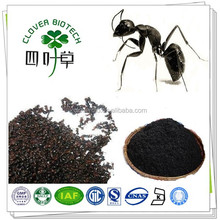 Polyrhachis vicina Roger extract powder