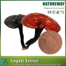 Competitive price ganoderma extract triterpene