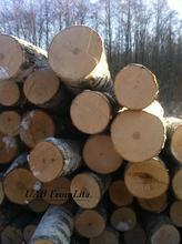 Birch,pine and spruce logs
