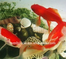 Best selling New Automaticfish floating devices for fish food with low price high quality for aquaculture
