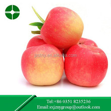 wholesale Chinese Red Fresh Fuji Apple for export