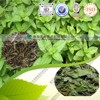 Plant extract dried mint leaves