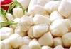 2IQF Frozen Bay Scallop meat-from professional supplier