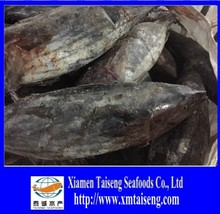 1.3kg -1.8kg Katsuwonus Pelamis Frozen Skip Jack Tuna