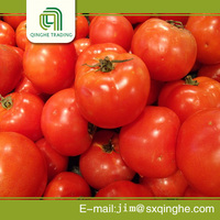 specifications big organic fresh tomato