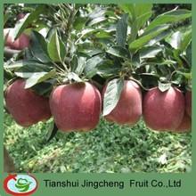red apple fruit supplier