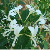 Factory supply 100% Natural honeysuckle flower extract , Chlorogenic acids 20% 25% 98%